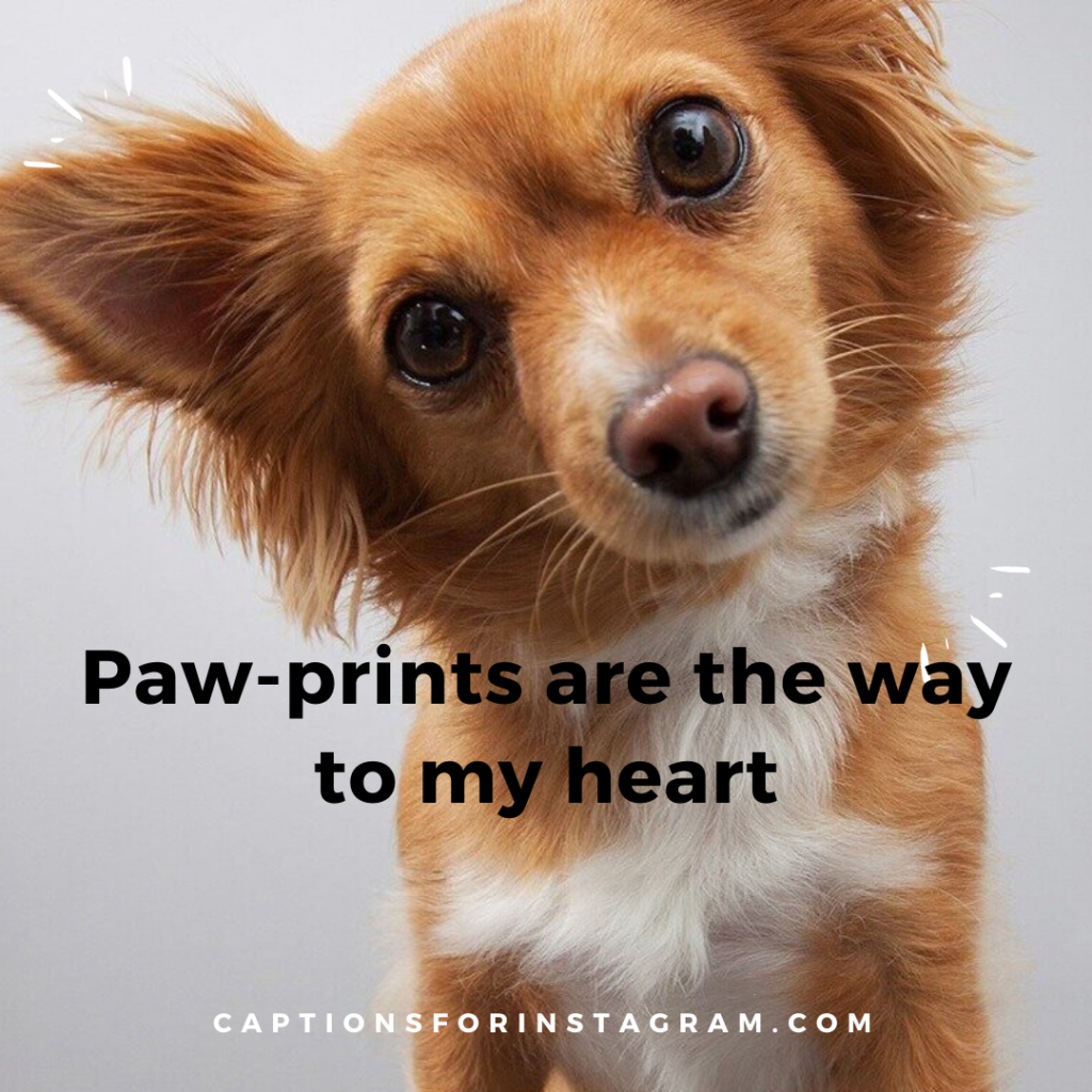 1-captionsforinstagram -  dogs captions