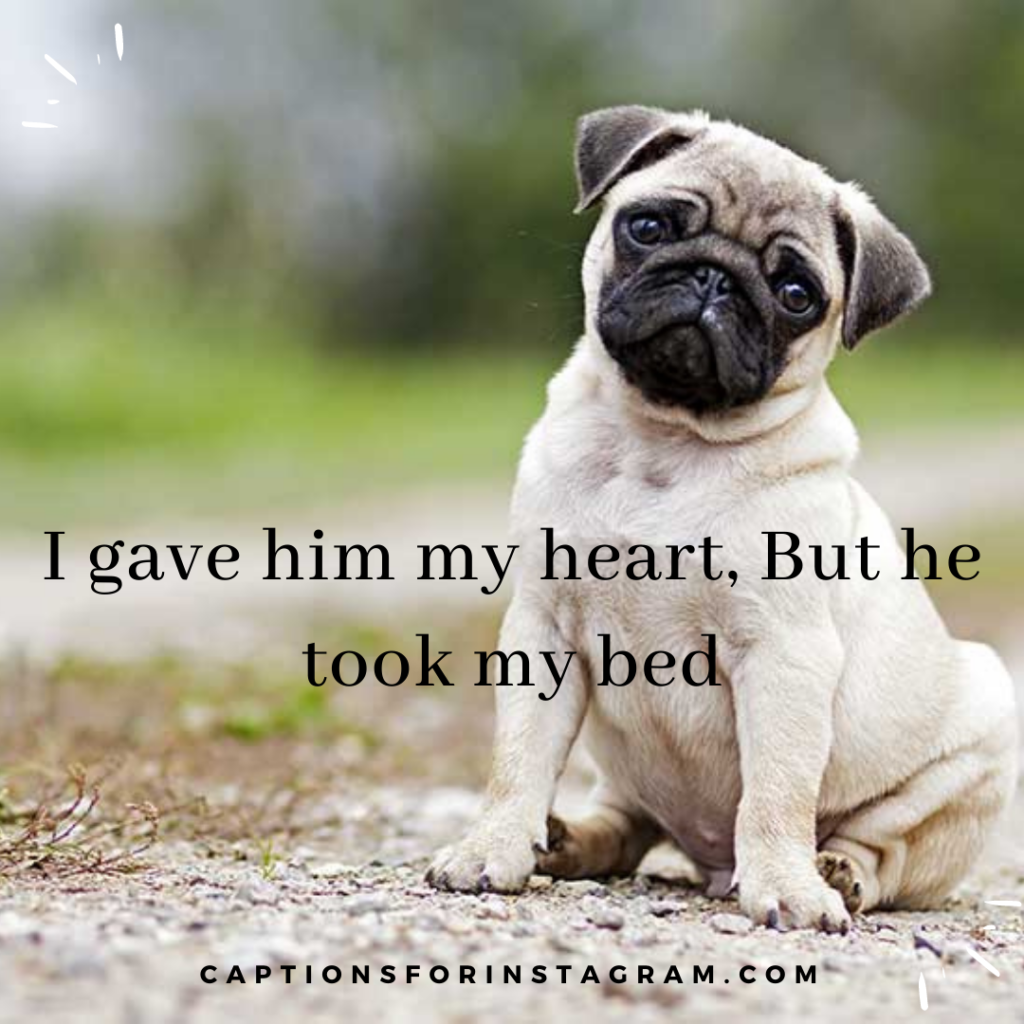 2-captionsforinstagram-funny dogs-captions5