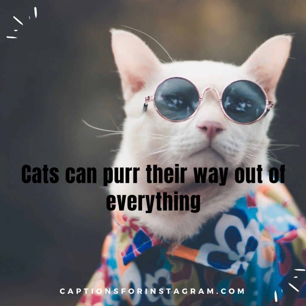 3-captionsforinstagram-funny-cats-captions-2