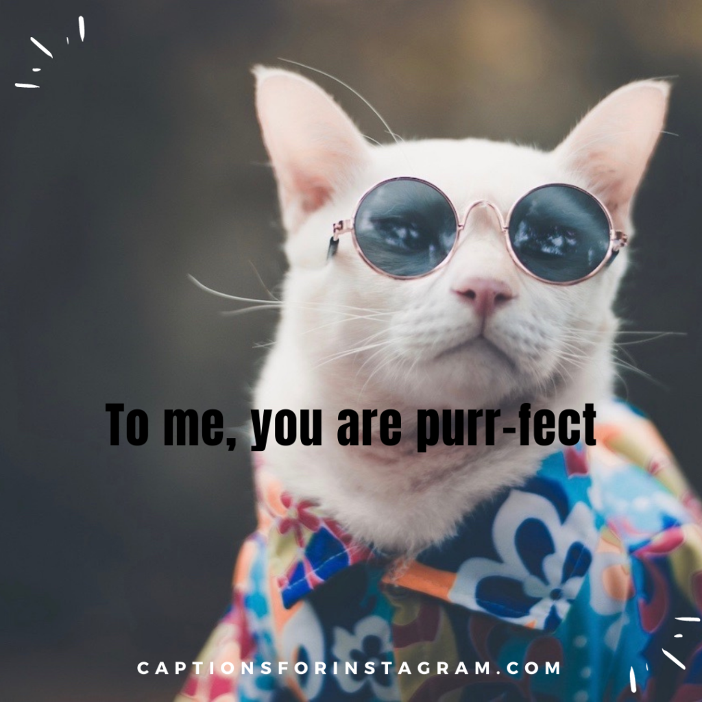 3-captionsforinstagram-funny cats captions-5