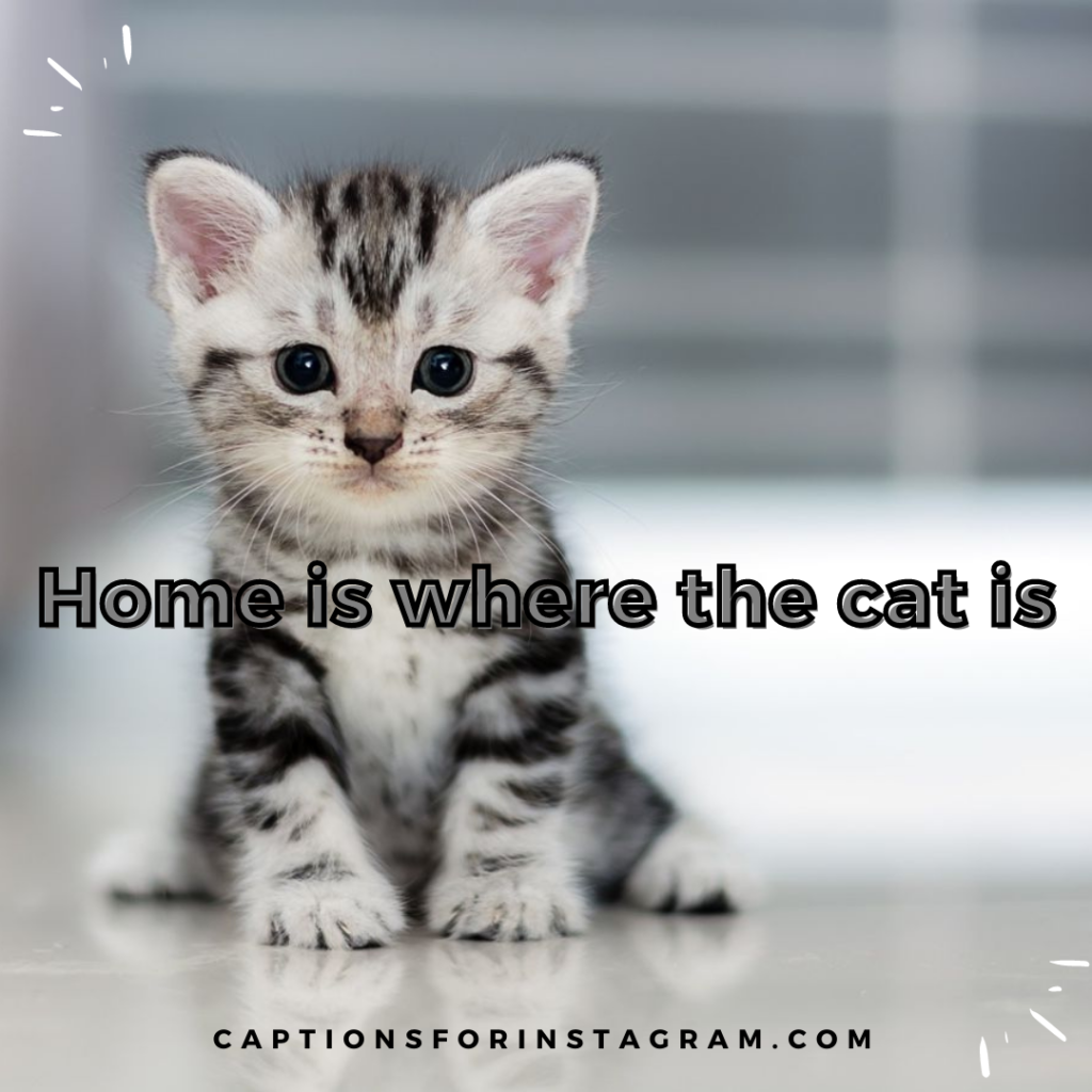 4-captionsforinstagram-cats-captions-4
