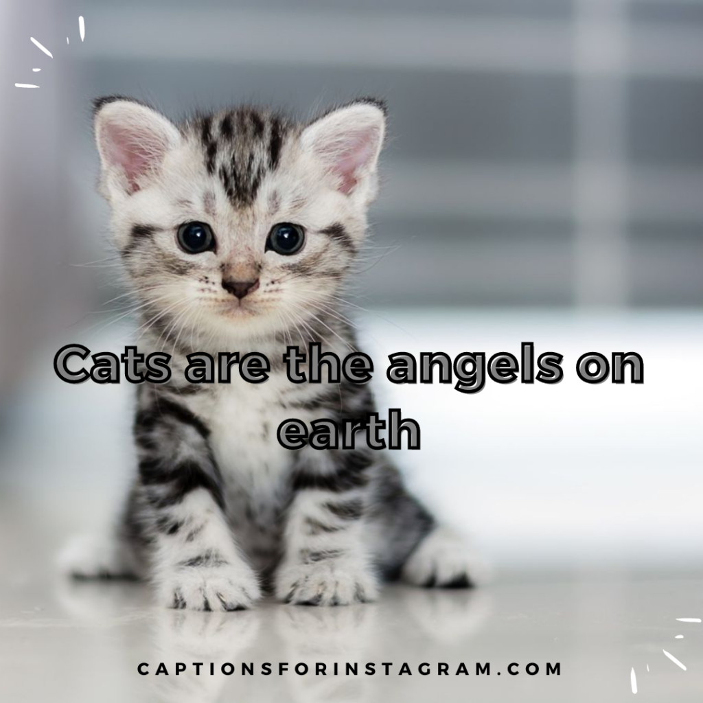 4-captionsforinstagram-cats-captions-5