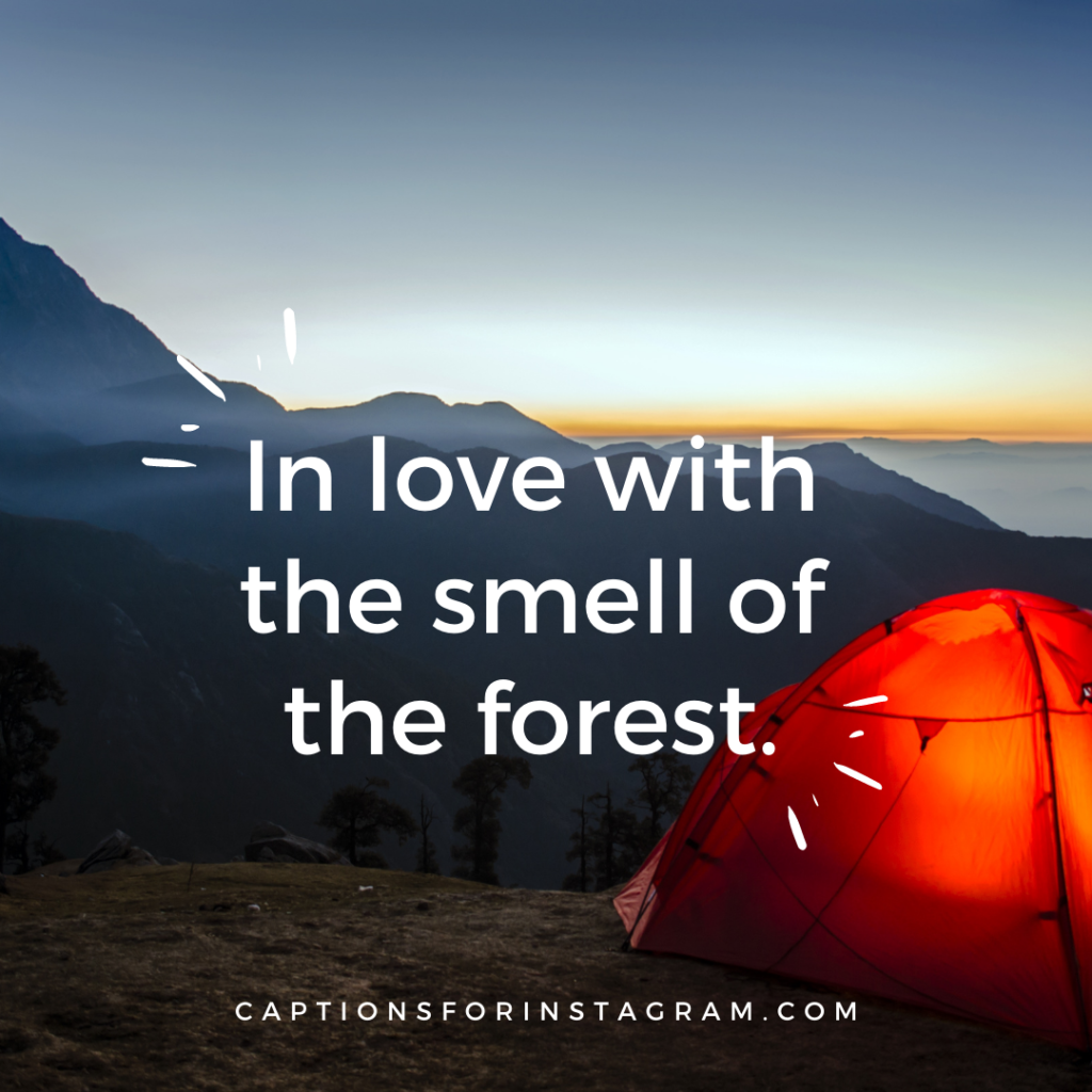In love with the smell of the forest.