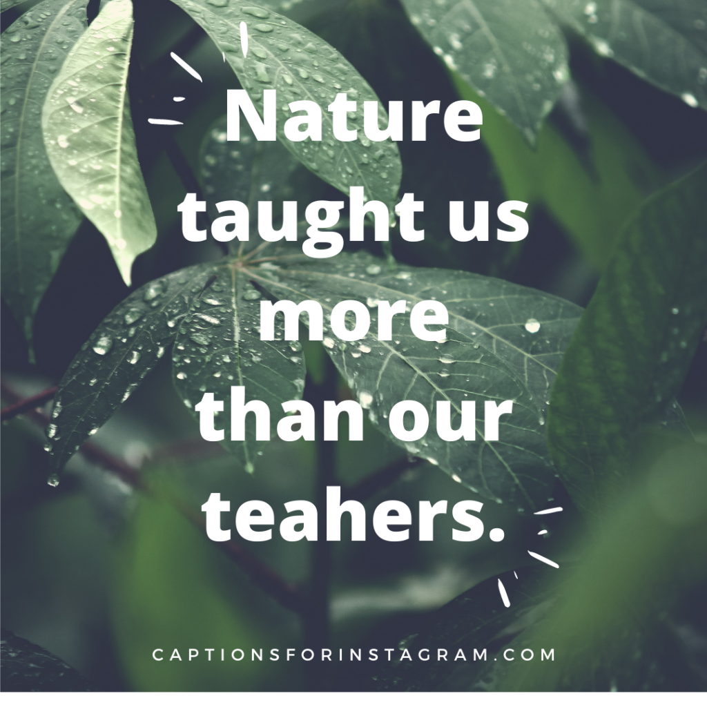 Nature tought us more than our teahers.
